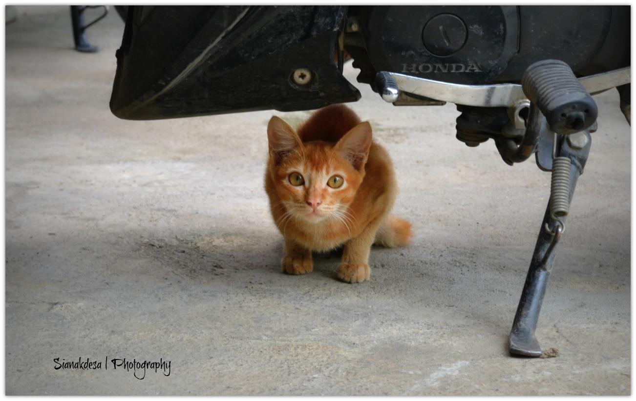 Cat Stories Sianakdesa