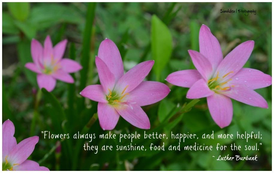 bunga sianakdesa