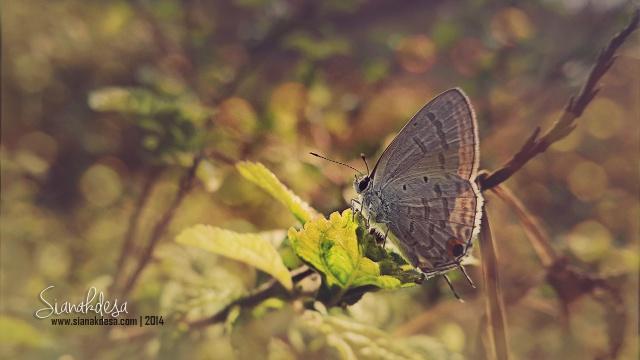 Cute Little Butterfly